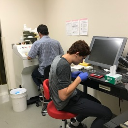 Hard at work, mounting slices of fixed mouse brains